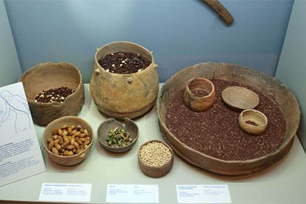 Almeria Museum Varied Diet