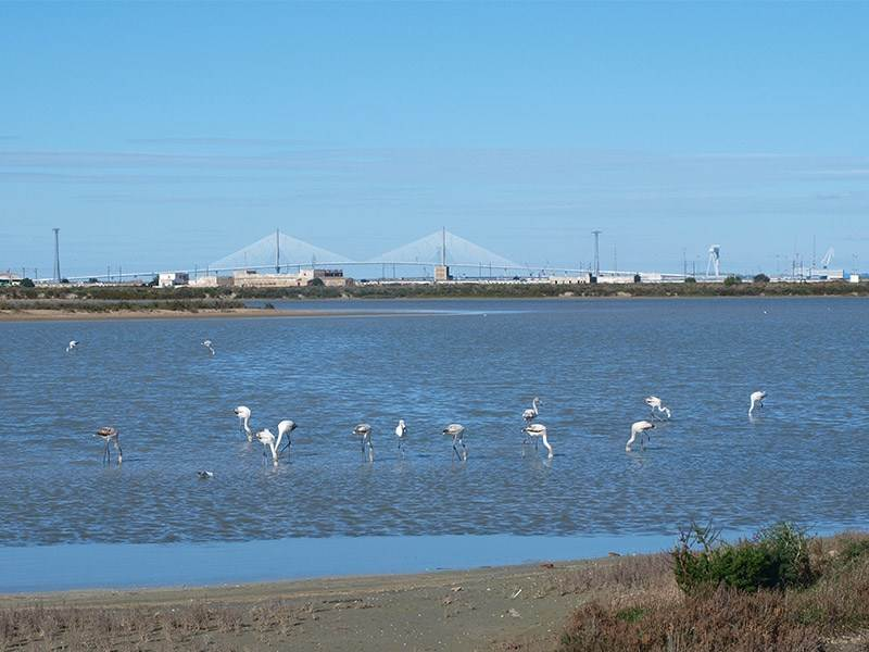 Birdwatching on the Bahia de Cadiz