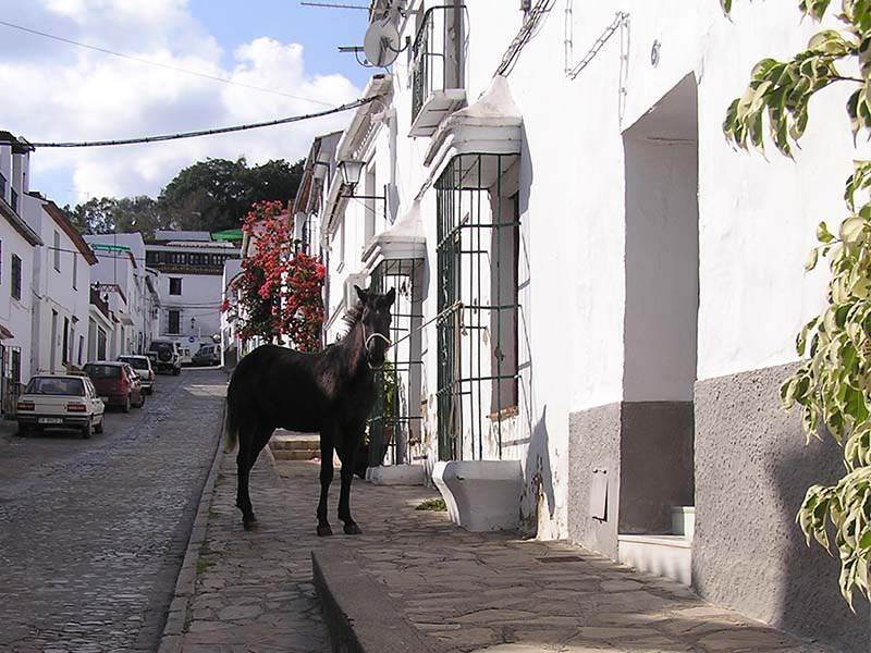 Horse in the Street, Jimena de la Frontera