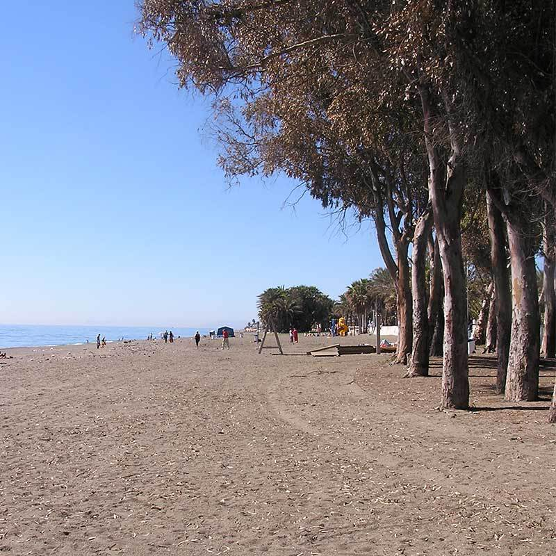 Eucalyptus trees shade the beach