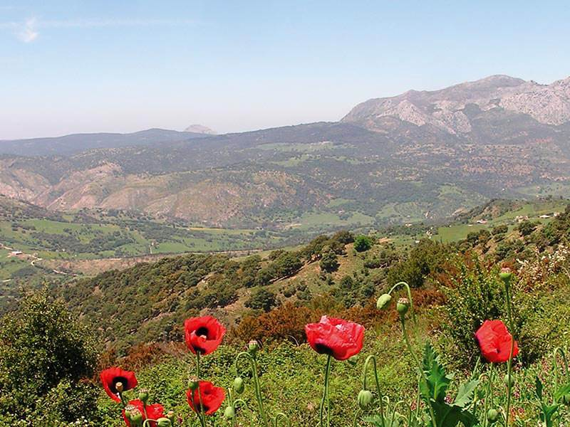 Poppies and karstic ridges